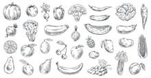Sketched Vegetables And Fruits. Hand Drawn Organic Food, Engraving Vegetable And Fruit Sketch Vector Illustration Set