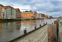 Seagull Sitting In Front Of Beautiful Traditional Norwegian Buildings In Trondheim