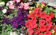 Flowerbed With Many Flowers In Spring To Decorate The Garden