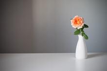 Orange Rose In White Vase On Gray Background