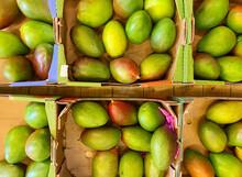 Premium Mangoes In A Cardboard Box. Top View.