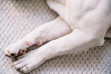 Paws Of Dog On Soft Blanket