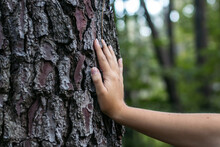 Crop Woman Touching Tree Trunk With Rough Bark In Forest