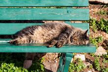 Cute Cat Sleeping On A Bench