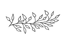 Vector Illustration Of A Branch Of A Plant With Leaves. Doodle Sketch. Branch On A White Background. Design For Print, Banner, Greeting Card, Logo, Stickers, Icons. Vector Illustration Isolated On Whi