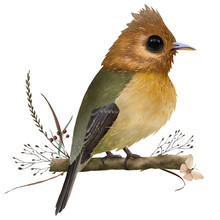 The Tufted Flycatcher, Tiny Beautiful Bird On The Branch With Autumn Dry Herbs And Lovely Butterfly, Hand Drawn Isolated On A White Background