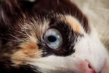 The Cute Blue Eye Of The Kitten