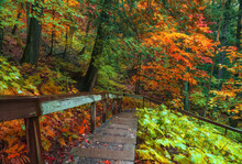 Autumn Trees Along Walking Trail In Black River National Forest In Michigan Upper Peninsula