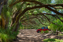 Shiny Red Jeep Is Parked In The Shade Under The Bent Branches Of Tropical Trees.