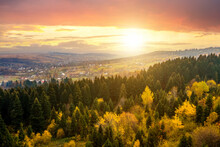 View From Above Of Dense Pine Forest With Canopies Of Green Spruce Trees And Colorful Yellow Lush Canopies In Autumn Mountains At Sunset.