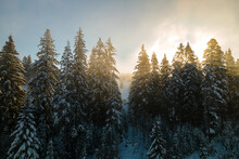 Amazing Winter Landscape With Pine Trees Of Snow Covered Forest In Cold Foggy Mountains At Sunrise.