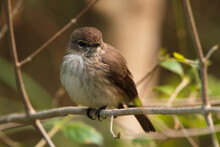 A Young Brown Bird Sitting On A Branch
