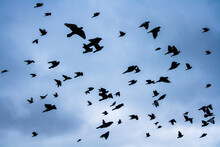 Flock Of Birds Flying Away In The Cloudy Sky