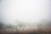 Natural Landscape With Fog