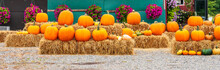 Panorama Of Autumn Orange Pumpkins. Preparing For Halloween. Harvested Pumpkins Are Stacked On Hay For Sale
