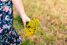 A Bouquet Of Yellow Wildflowers In The Hands Of A Girl. Hands Close-up. The Girl Is Dressed In A Blue Dress. She's Standing In A Field. Summer And The Sun