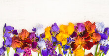 Beautiful Greeting Card With Blooming Multicolored Iris Flowers. White Wooden Background. Space For Text