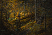 Beautiful Nature Scenic View Of Deep Forest In Autumn Seasonal Time With Falling Tree And Yellow Moss Moody Environment