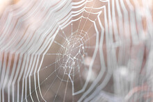 Close-up Of A Spider Web On A Blurred Background.