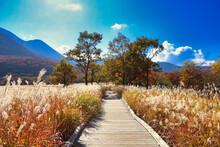 Japan Tade Hara Wetland Nature Research Road Autumn Koji Mountain And Susukino