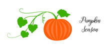 Orange Pumpkin, Halloween Design, Fall Or Autumn Pumpkin Illustration With Green Vine Leaves And Orange Gourd. October Harvest Season Vector, Farm Vegetable That Is Healthy And Nutritious