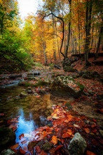 Autumn Leaves Float In A River That Flows Through A Canyon With Tall Trees.