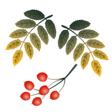Flat Art Cluster Of Red Berries And Two Twigs With Autumn Green And Yellow Leaves Isolated On A White Background