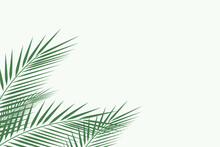 Forest Background, Nature, Landscape. Evergreen Coniferous Trees. Spruce, Christmas Tree. Silhouette Vector