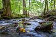 canvas print picture - Lauchagrund bei Bad Tabarz im Thüringer Wald