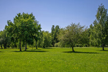 Park With Different Deciduous Trees In Kolomenskoye In Moscow, Russia