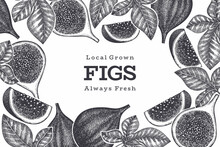 Hand Drawn Fig Fruits Design Template. Organic Fresh Food Vector Illustration. Retro Fig Fruit Banner.