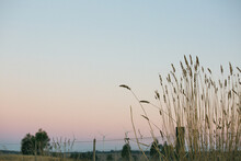 Countryside At Dusk With Grass Stalks Foreground Details