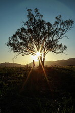 Girl And Tree Silhouetted In Sunrise Over A Mountain, Sun Shines Through Branches