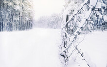 Cold White Landscape Of Snowy Forest Behind Rows Of Barbed Wire In Winter, Concept Of Seasonal Changes In Nature, Protection Of Plants From Wild Animals