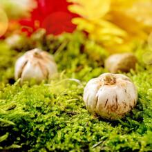 Ceramic Pumpkins On Moss