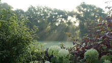 Morning Sunbeams Sun Rays Behind The Trees With Dew And Beautiful Garden Perspective In Front