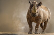 portrait of a large african rhino standing in front of a brown background