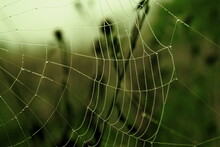 Photo Of A Spider's Web. The Cobweb Was Photographed In An Early Summer Morning. Transparent Drops Of Water Are Visible On It. There Is Green Grass In The Background