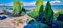 Row Of Tall, Columnar Rocks At A Shore Covered With Green Algae On A Sunny Day
