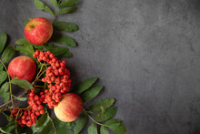 Bright Orange Rowan Berries And Ripe Delicious Red Apples On A Dark Background, Top View. Autumn Series