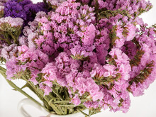 Statice Is A Herbaceous Perennial Or Annual Plant, It Belongs To The Lead Family, Statice Is Also Often Called Kermek And Limonium, The Flower Belongs To Dried Flowers, As It Is Used To Create Winter