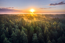 Aerial View Of Sunrise Over A Pine Forest With Lake. Foggy And Colorful Morning In Countryside.