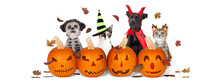 Halloween Puppies And Kittens With Jack-O-Lanterns