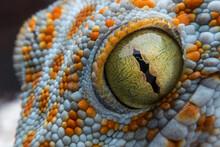 Eye Of Gecko And Skin Texture Macro Mode