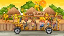 Safari At Sunset Time Scene With Many Children Watching Giraffe Group