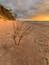 Dry Bush Branches On The Empty Beach, Natural Orange Sunlight, Warm Colors
