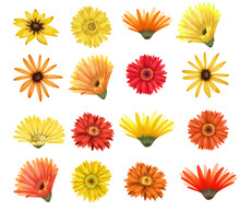 Red And Yellow Asters And Gerber Flowers Buttons Set, Isolated Floral Elements On White Background