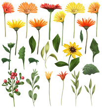 Red And Yellow Asters And Gerber Flowers, Green Leaves And Branches Set, Isolated Floral Elements On White Background