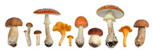 Set Of Different Mushrooms Isolated On A White Background.