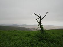 Árbol Sin Hojas Sobre Colina Con Plantas Y Cielo Nublado